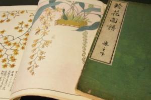 珍花図譜上下巻の写真